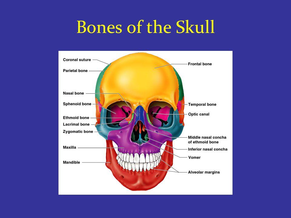 Human Skull, Superior View Slide 5.23 Copyright © 2003 Pearson Education, Inc.