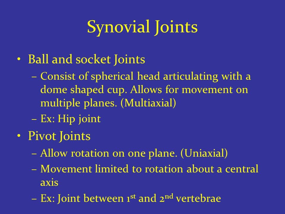 Synovial Joints Ball and socket Joints –Consist of spherical head articulating with a dome shaped cup.