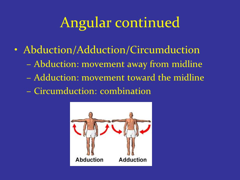 Angular continued Abduction/Adduction/Circumduction –Abduction: movement away from midline –Adduction: movement toward the midline –Circumduction: combination
