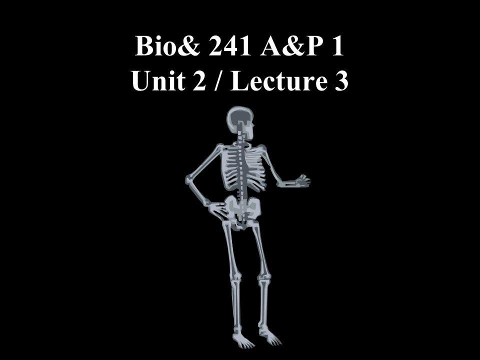 Bio& 241 A&P 1 Unit 2 / Lecture 3