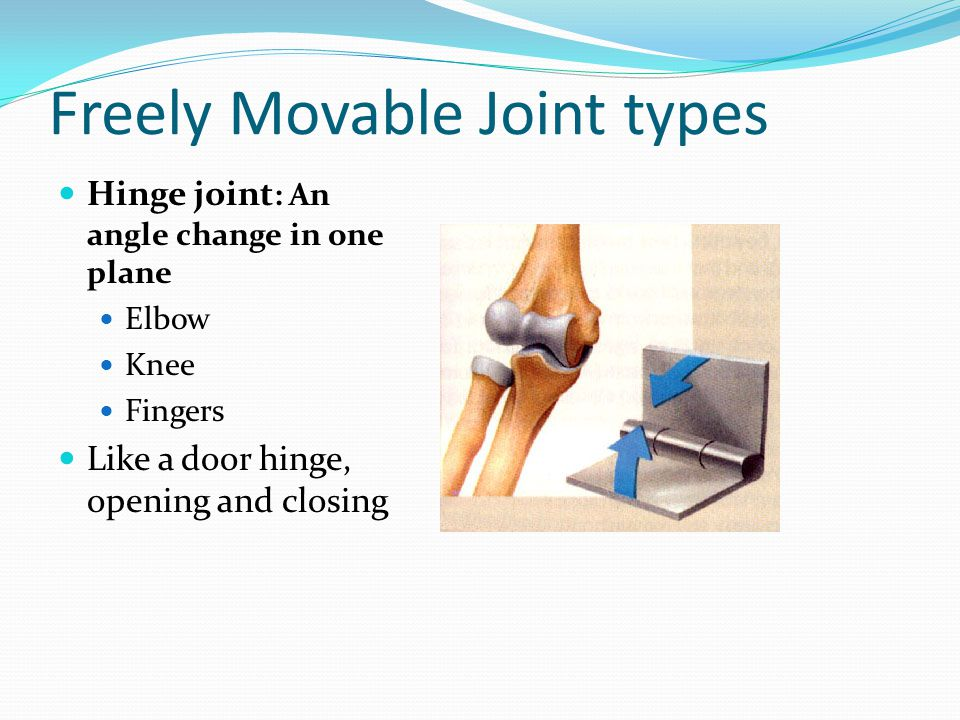 Freely Movable Joint types Hinge joint : An angle change in one plane Elbow Knee Fingers Like a door hinge, opening and closing