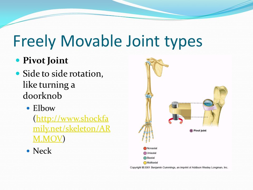 Freely Movable Joint types Pivot Joint Side to side rotation, like turning a doorknob Elbow (http://www.shockfa mily.net/skeleton/AR M.MOV)http://www.shockfa mily.net/skeleton/AR M.MOV Neck