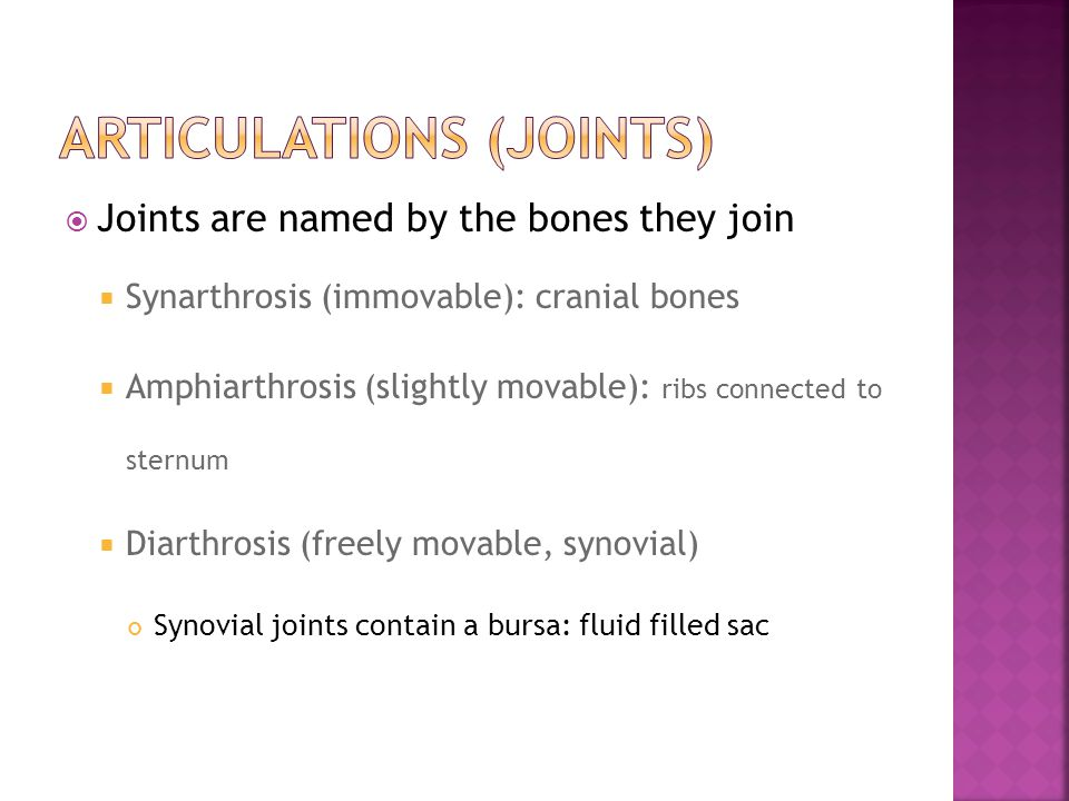  Joints are named by the bones they join  Synarthrosis (immovable): cranial bones  Amphiarthrosis (slightly movable): ribs connected to sternum  Diarthrosis (freely movable, synovial) Synovial joints contain a bursa: fluid filled sac