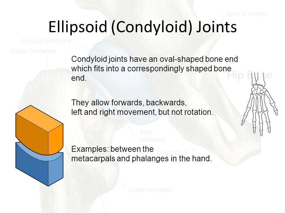 Ellipsoid (Condyloid) Joints Condyloid joints have an oval-shaped bone end which fits into a correspondingly shaped bone end.