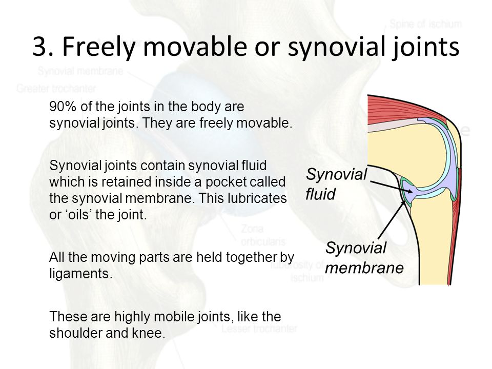 3. Freely movable or synovial joints 90% of the joints in the body are synovial joints. They are freely movable. Synovial joints contain synovial flui