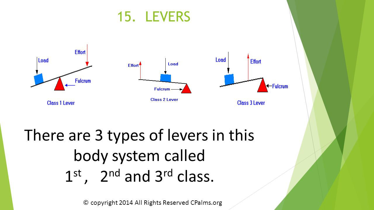 15. LEVERS There are 3 types of levers in this body system called 1 st, 2 nd and 3 rd class. © copyright 2014 All Rights Reserved CPalms.org