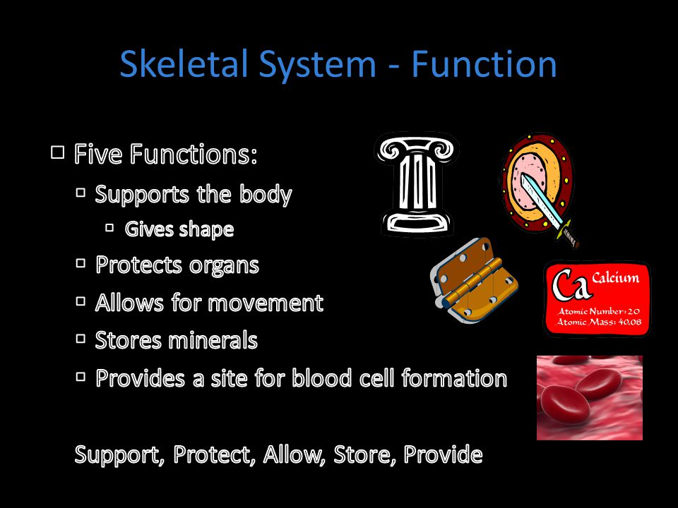 Skeletal System - Function