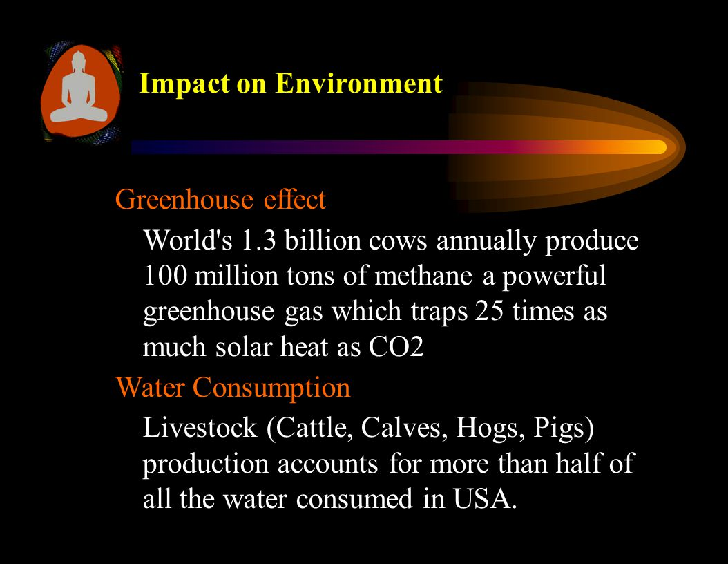 Greenhouse effect World s 1.3 billion cows annually produce 100 million tons of methane a powerful greenhouse gas which traps 25 times as much solar heat as CO2 Water Consumption Livestock (Cattle, Calves, Hogs, Pigs) production accounts for more than half of all the water consumed in USA.