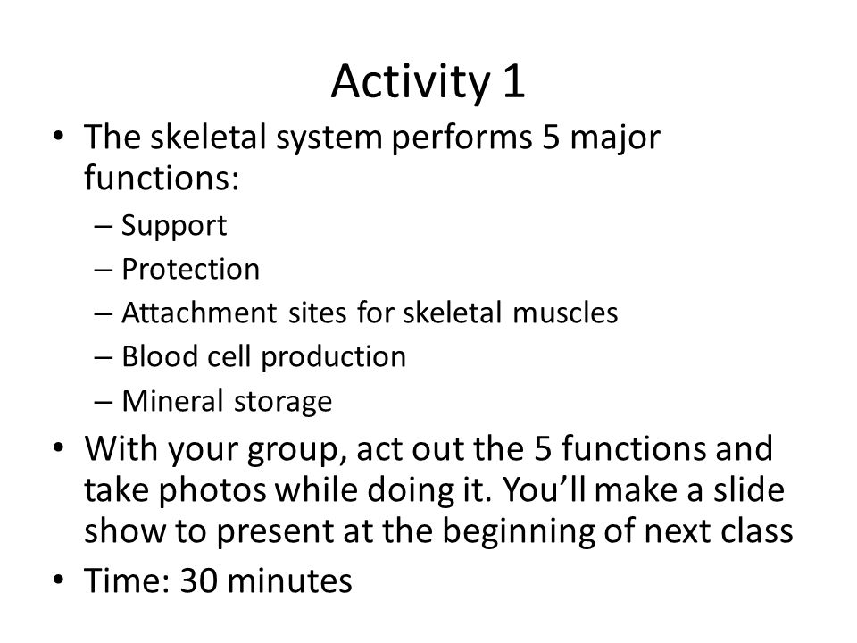 Activity 2 With your group, try to label the bones you have been given on the skeletal system diagram Don't use your book.