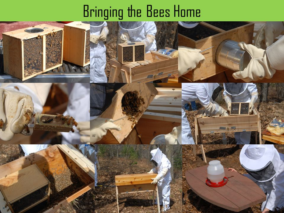 Bringing the Bees Home Keepin g Bees in a Top Bar Hive that I built.