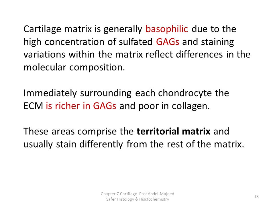 Cartilage matrix is generally basophilic due to the high concentration of sulfated GAGs and staining variations within the matrix reflect differences