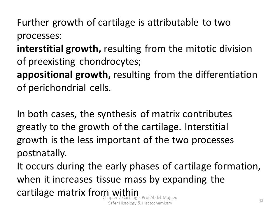 Further growth of cartilage is attributable to two processes: interstitial growth, resulting from the mitotic division of preexisting chondrocytes; ap