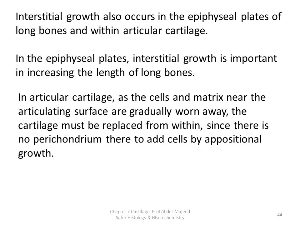 Chapter 7 Cartilage Prof Abdel-Majeed Safer Histology & Hisctochemistry Interstitial growth also occurs in the epiphyseal plates of long bones and wit