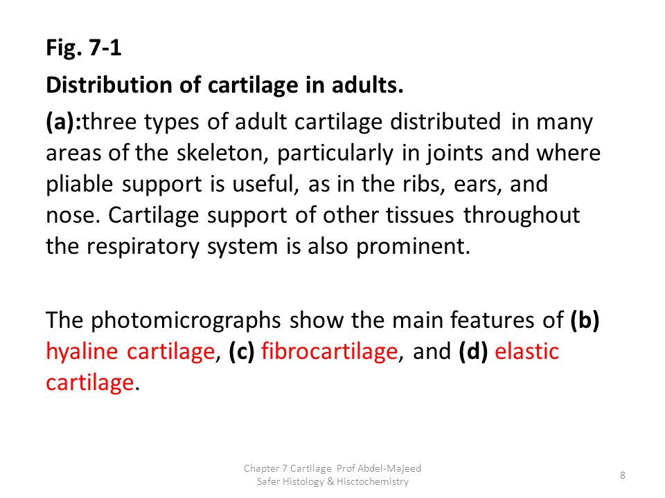 Fig. 7-1 Distribution of cartilage in adults. (a):three types of adult cartilage distributed in many areas of the skeleton, particularly in joints and