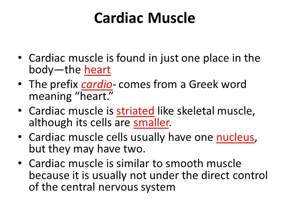 Cardiac Muscle Cardiac muscle is found in just one place in the body—the heart The prefix cardio- comes from a Greek word meaning heart. Cardiac muscle is striated like skeletal muscle, although its cells are smaller.