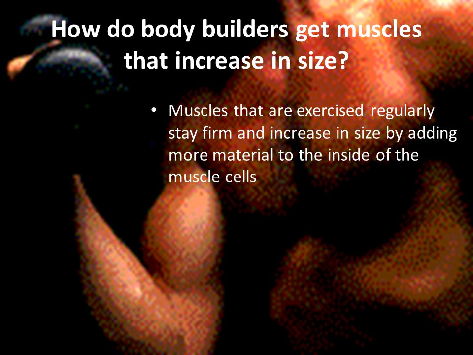 How do body builders get muscles that increase in size.