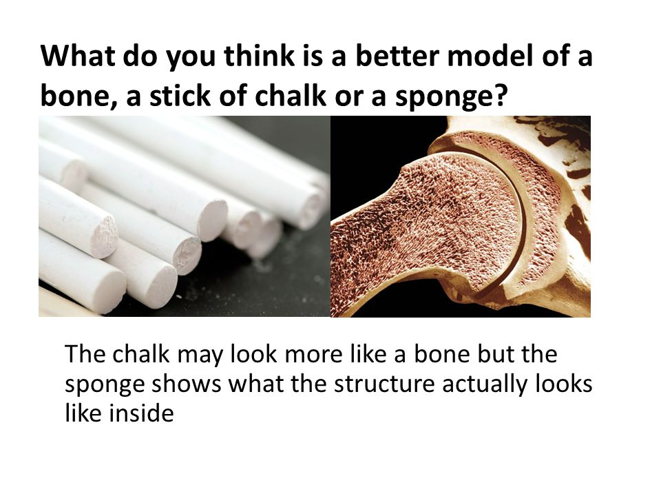 What do you think is a better model of a bone, a stick of chalk or a sponge.