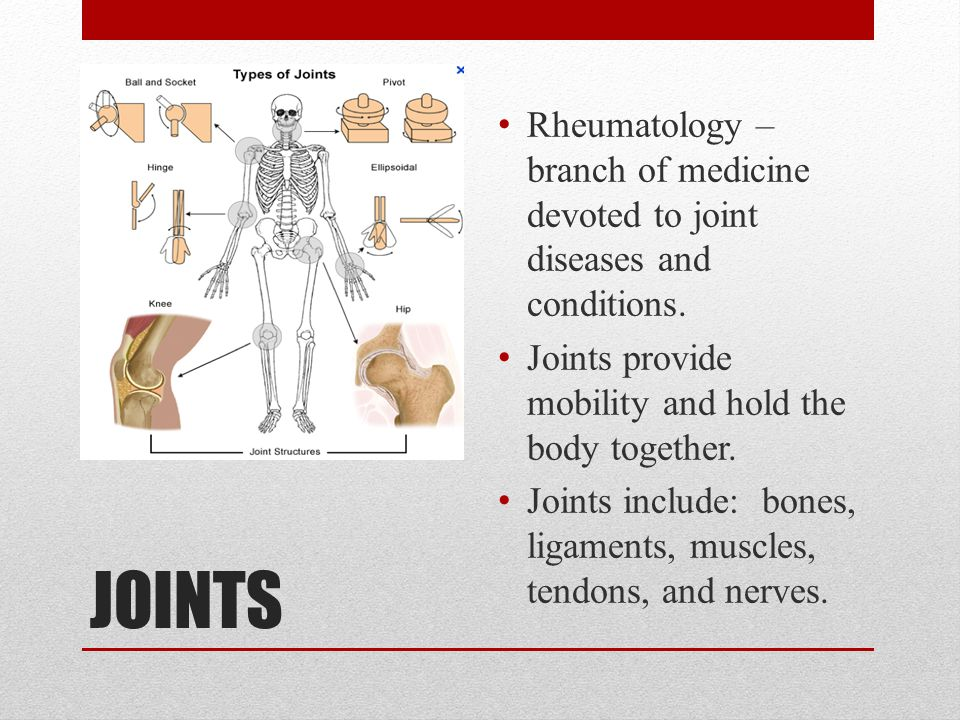 JOINTS Rheumatology – branch of medicine devoted to joint diseases and conditions. Joints provide mobility and hold the body together. Joints include: