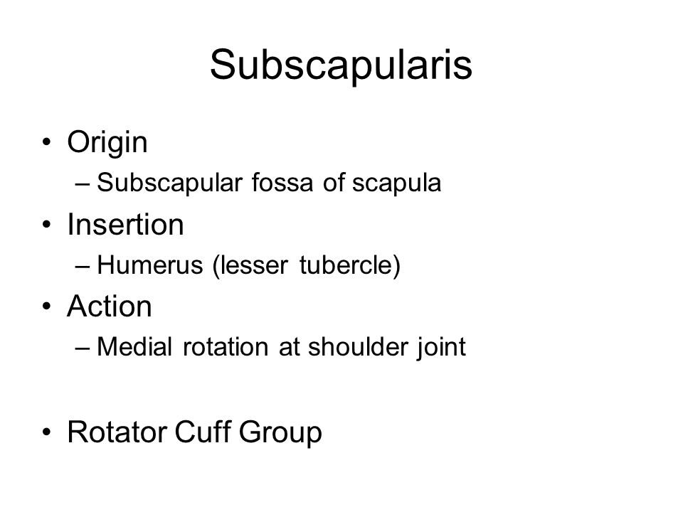 Subscapularis Origin –Subscapular fossa of scapula Insertion –Humerus (lesser tubercle) Action –Medial rotation at shoulder joint Rotator Cuff Group