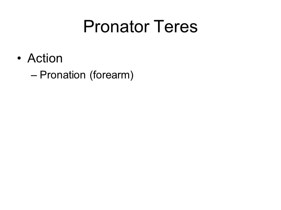 Pronator Teres Action –Pronation (forearm)