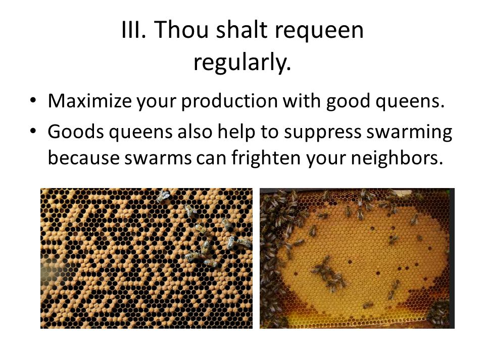 III. Thou shalt requeen regularly. Maximize your production with good queens.
