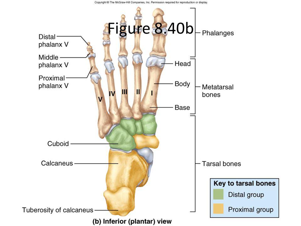 Figure 8.40b