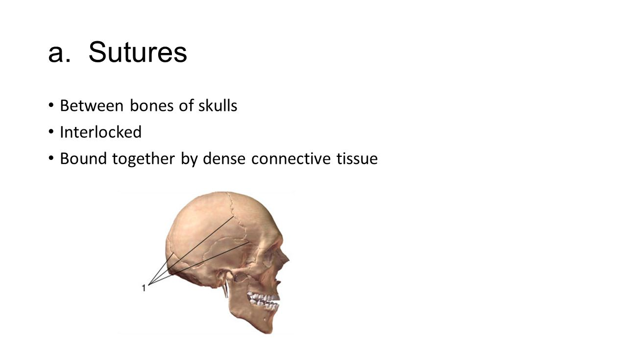 a. Sutures Between bones of skulls Interlocked Bound together by dense connective tissue