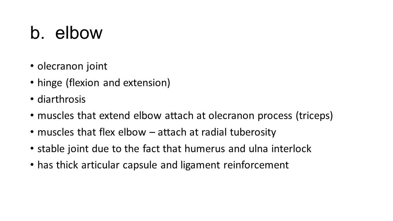 b. elbow olecranon joint hinge (flexion and extension) diarthrosis muscles that extend elbow attach at olecranon process (triceps) muscles that flex e