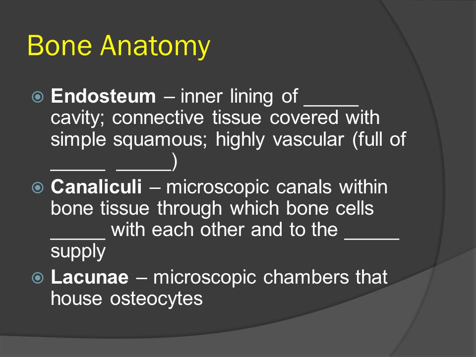 Bone Anatomy  Endosteum – inner lining of _____ cavity; connective tissue covered with simple squamous; highly vascular (full of _____ _____)  Canal