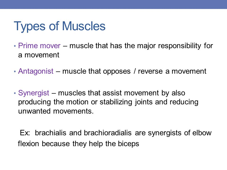 Types of Muscles Prime mover – muscle that has the major responsibility for a movement Antagonist – muscle that opposes / reverse a movement Synergist – muscles that assist movement by also producing the motion or stabilizing joints and reducing unwanted movements.