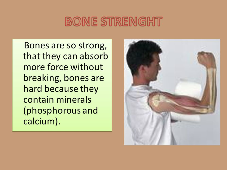 Bones are so strong, that they can absorb more force without breaking, bones are hard because they contain minerals (phosphorous and calcium).
