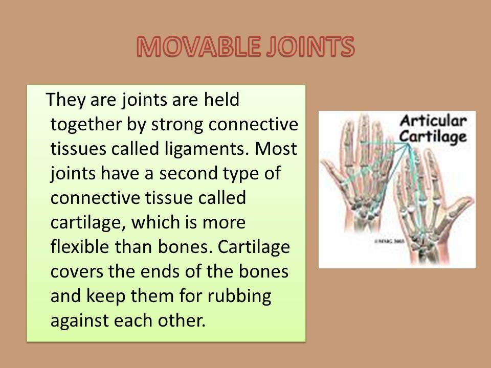 They are joints are held together by strong connective tissues called ligaments. Most joints have a second type of connective tissue called cartilage,