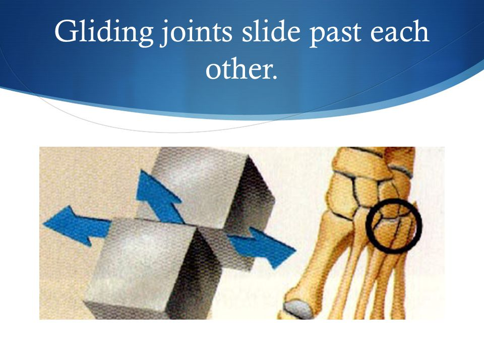 Gliding joints slide past each other.