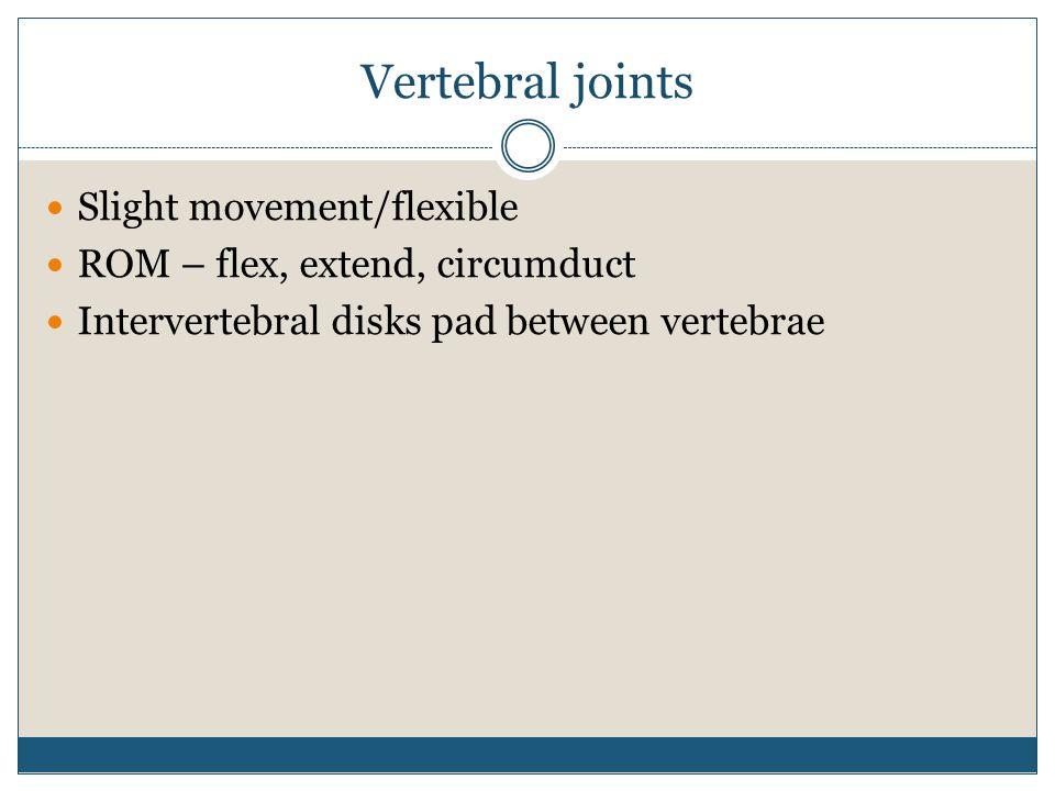 Vertebral joints Slight movement/flexible ROM – flex, extend, circumduct Intervertebral disks pad between vertebrae