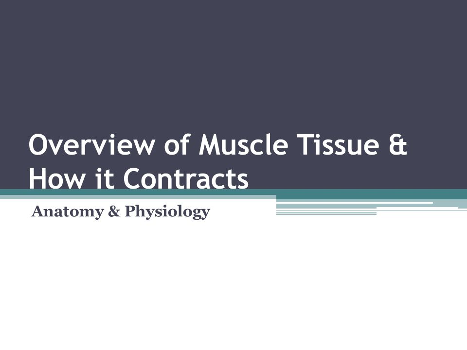 Overview of Muscle Tissue & How it Contracts Anatomy & Physiology