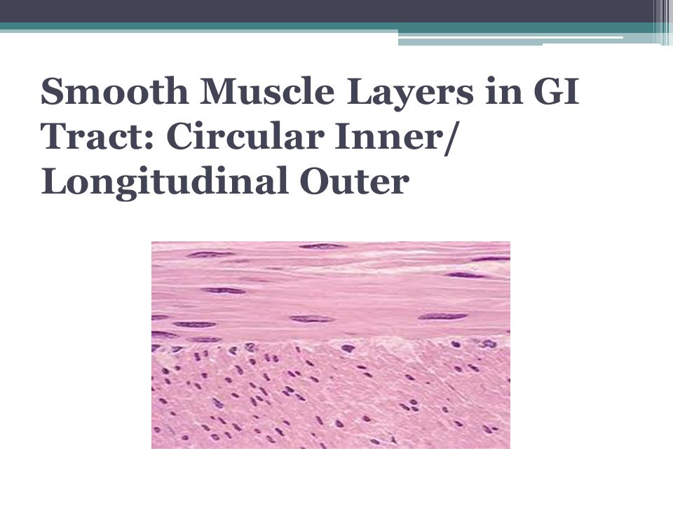 Smooth Muscle Layers in GI Tract: Circular Inner/ Longitudinal Outer