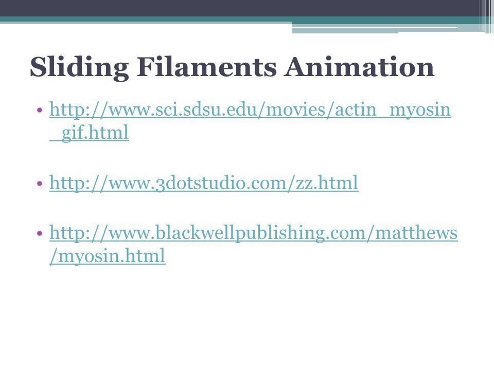 Sliding Filaments Animation http://www.sci.sdsu.edu/movies/actin_myosin _gif.htmlhttp://www.sci.sdsu.edu/movies/actin_myosin _gif.html http://www.3dotstudio.com/zz.html http://www.blackwellpublishing.com/matthews /myosin.htmlhttp://www.blackwellpublishing.com/matthews /myosin.html