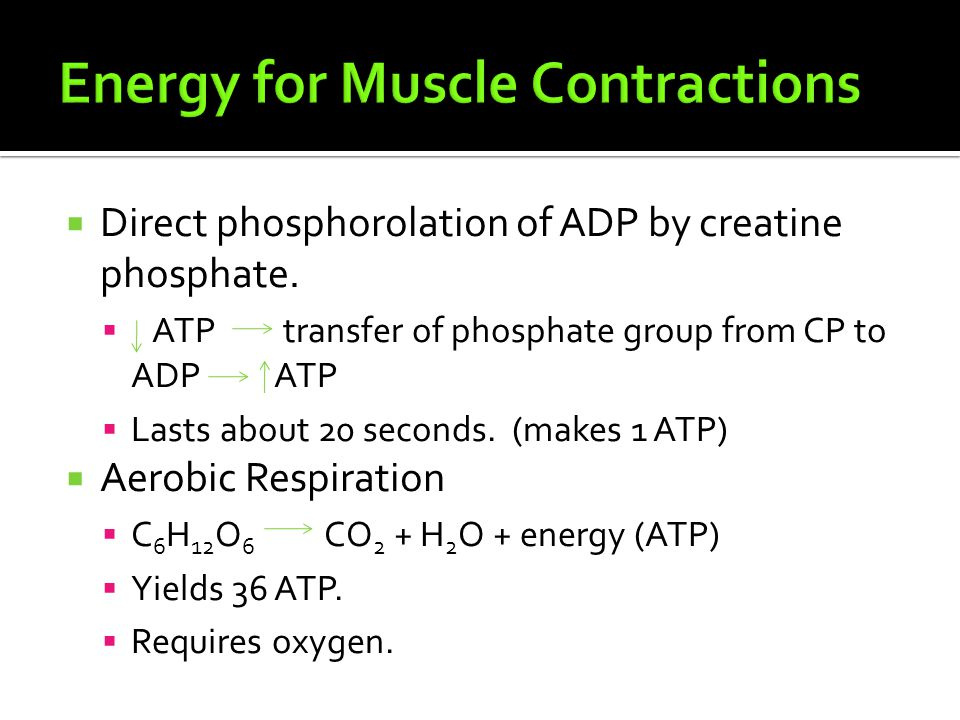  Direct phosphorolation of ADP by creatine phosphate.  ATP transfer of phosphate group from CP to ADP ATP  Lasts about 20 seconds. (makes 1 ATP) 