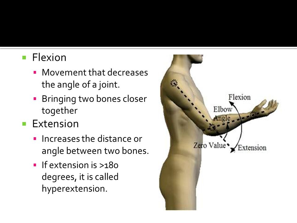  Flexion  Movement that decreases the angle of a joint.  Bringing two bones closer together  Extension  Increases the distance or angle between t