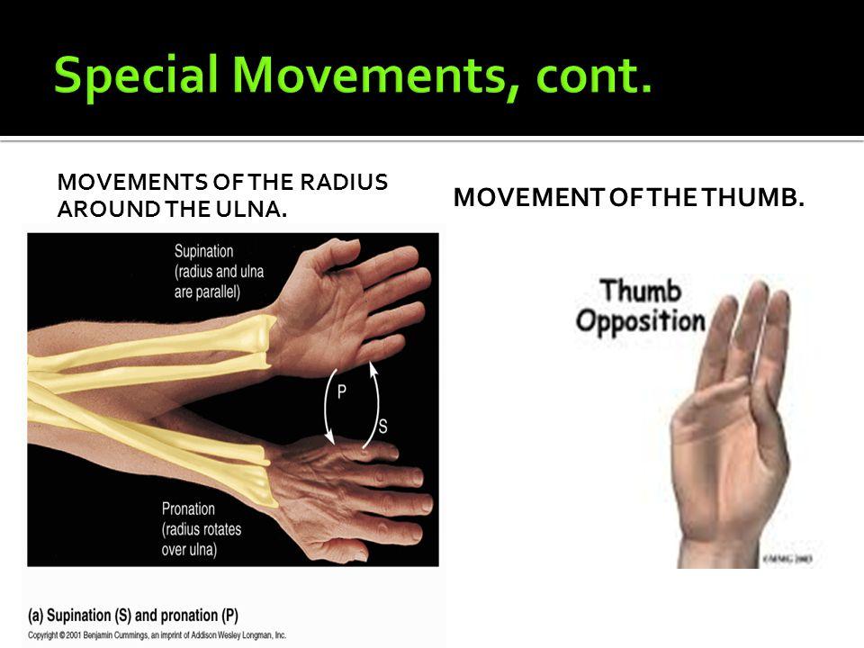 MOVEMENTS OF THE RADIUS AROUND THE ULNA. MOVEMENT OF THE THUMB.