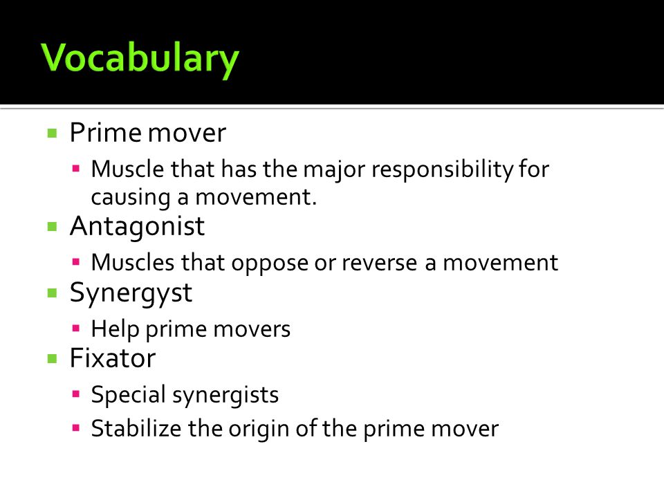  Prime mover  Muscle that has the major responsibility for causing a movement.  Antagonist  Muscles that oppose or reverse a movement  Synergyst