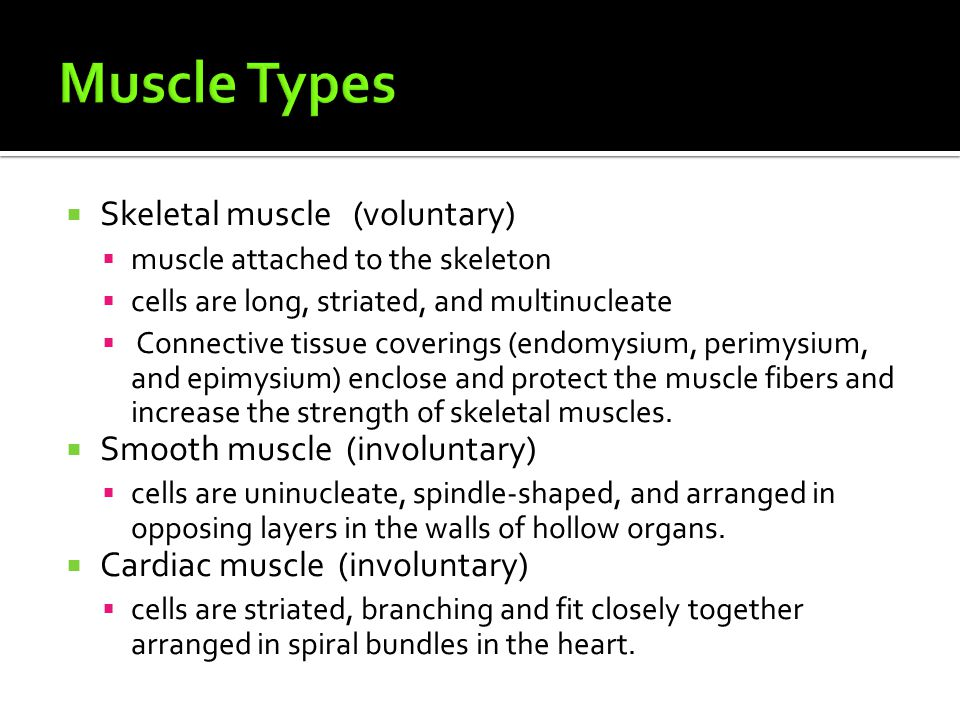  Skeletal muscle (voluntary)  muscle attached to the skeleton  cells are long, striated, and multinucleate  Connective tissue coverings (endomysium, perimysium, and epimysium) enclose and protect the muscle fibers and increase the strength of skeletal muscles.
