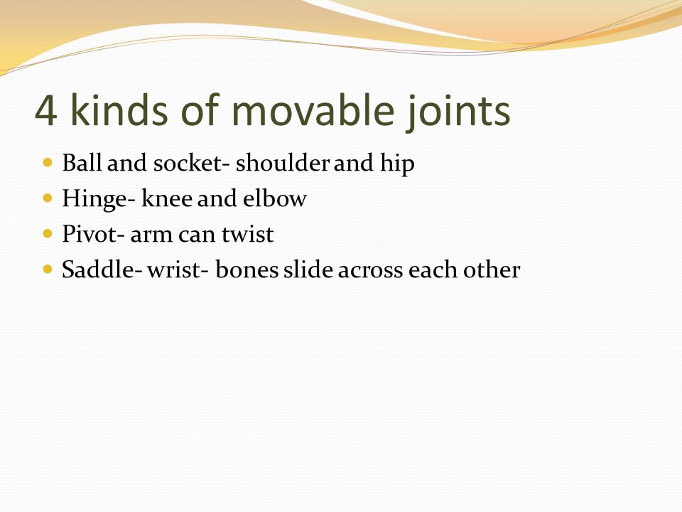 4 kinds of movable joints Ball and socket- shoulder and hip Hinge- knee and elbow Pivot- arm can twist Saddle- wrist- bones slide across each other