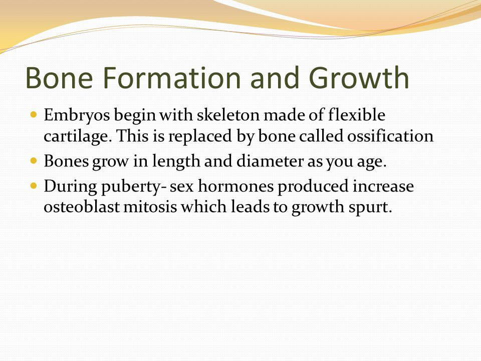 Bone Formation and Growth Embryos begin with skeleton made of flexible cartilage.