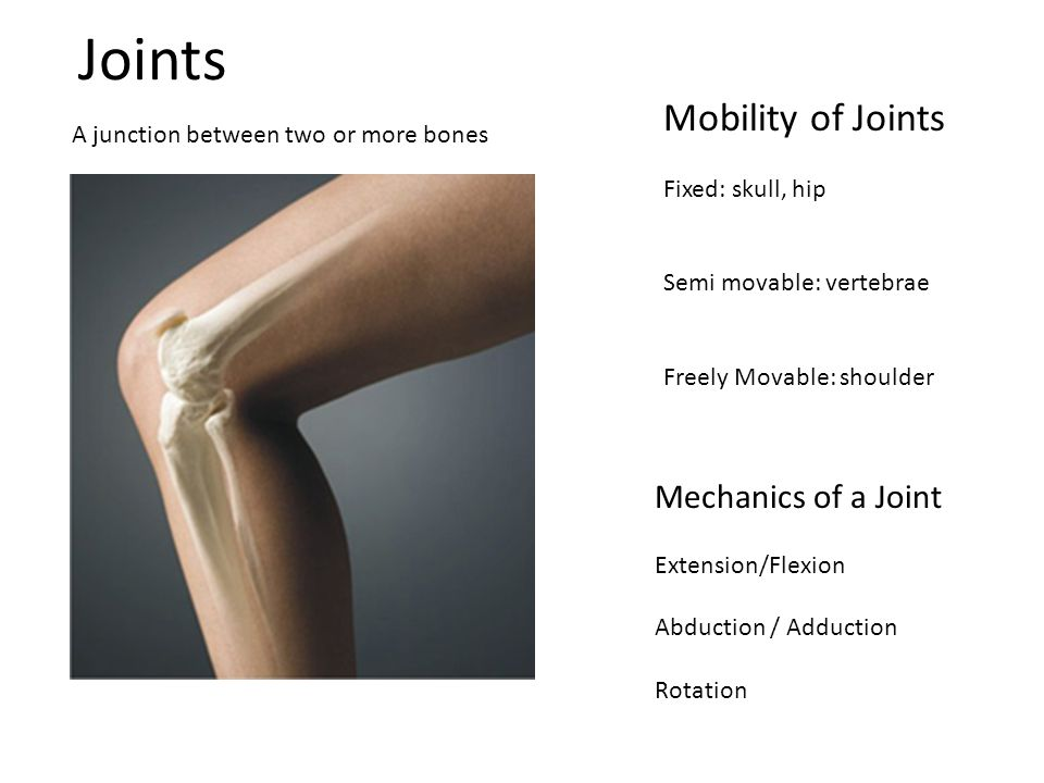 Joints A junction between two or more bones Mobility of Joints Fixed: skull, hip Semi movable: vertebrae Freely Movable: shoulder Mechanics of a Joint