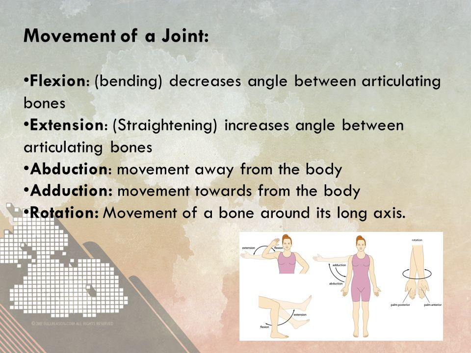 Movement of a Joint: Flexion: (bending) decreases angle between articulating bones Extension: (Straightening) increases angle between articulating bones Abduction: movement away from the body Adduction: movement towards from the body Rotation: Movement of a bone around its long axis.