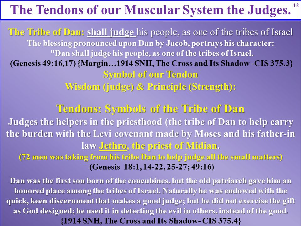 The Tendons of our Muscular System the Judges. 12 The Tribe of Dan: shall judge his people, as one of the tribes of Israel The blessing pronounced upo