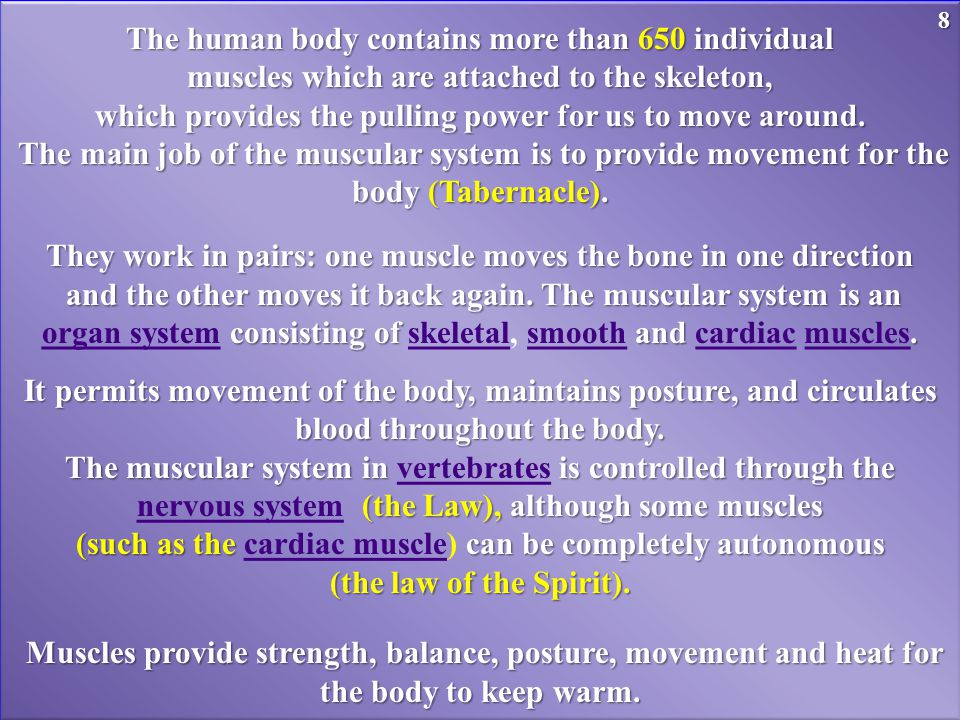 The human body contains more than 650 individual muscles which are attached to the skeleton, which provides the pulling power for us to move around.