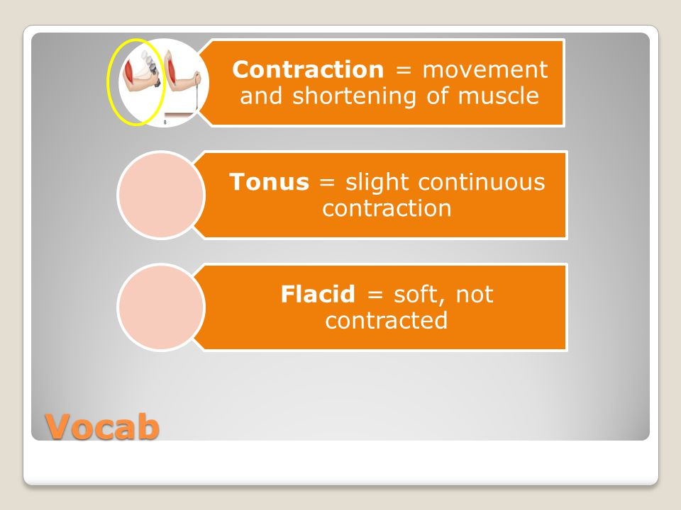 Vocab Contraction = movement and shortening of muscle Tonus = slight continuous contraction Flacid = soft, not contracted