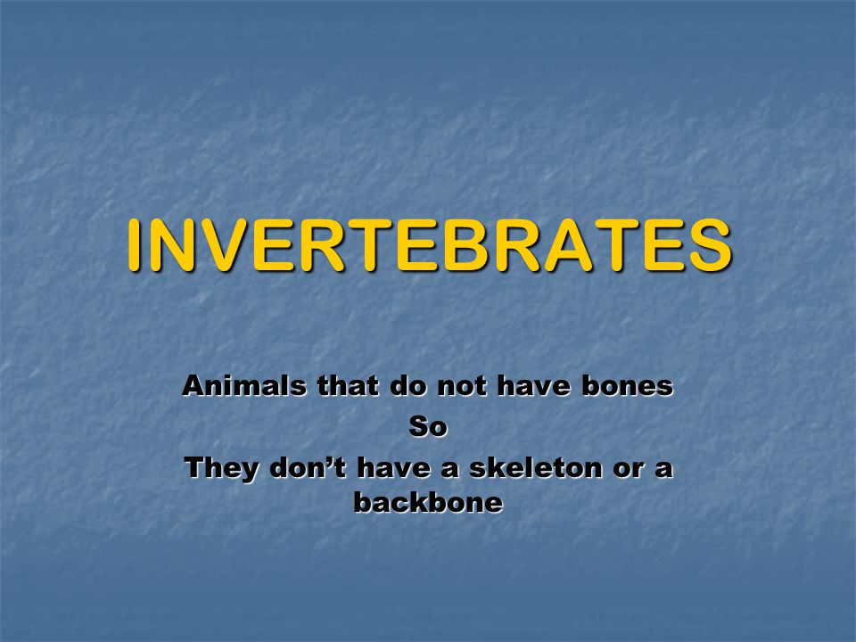 INVERTEBRATES Animals that do not have bones So They don't have a skeleton or a backbone